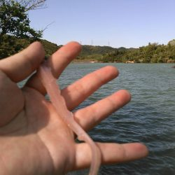 バス釣り!❤